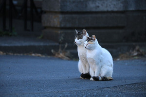 Cat02